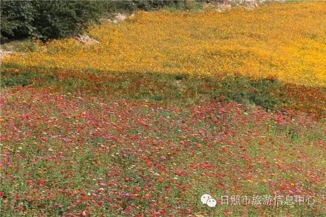 壁纸 成片种植 风景 植物 种植基地 桌面 640_427